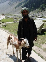 Indian Culture - Herder in Kashmir