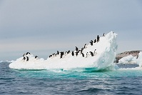 Antartic Geography - Penguins on an iceberg