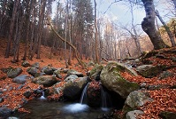 Bulgarian Geography - Stream in the forest