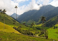 Colombian Geography - Cocora Valley