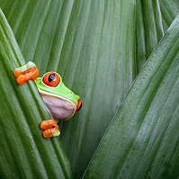 Costa Rican Geography - Frog