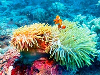 Indonesian Wildlife - Coral reefs