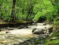 Iranian Geography - River in the forest