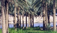 Iraqi Geography - Date trees along the Euphrates River