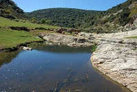 Israeli Geography - River in Rosh Pinna