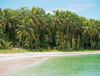 Panamanian Geography - Coconut trees along the coastline