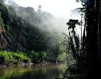 Peruvian Geography - Rain forest