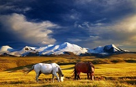 Russian Geography - Horses on Ukok Plateau