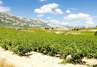 Spanish Geography - Vineyards