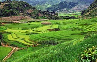 Vietnamese Geography - Rice terraces